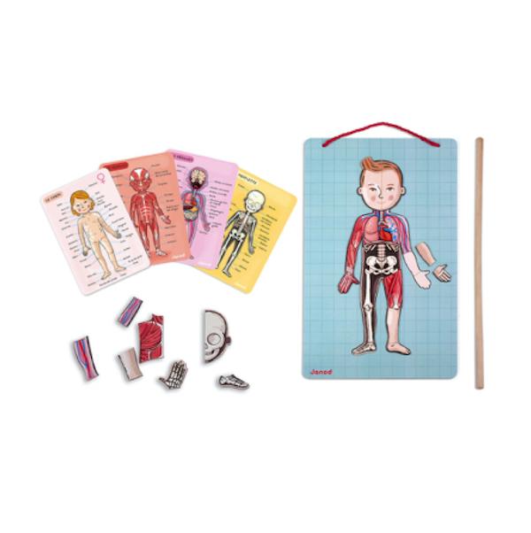 juego-de-anatomia-bodymagnet-janod-el-mundo-de-mico02