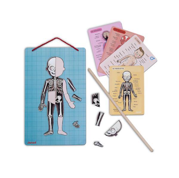 juego-de-anatomia-bodymagnet-janod-el-mundo-de-mico1