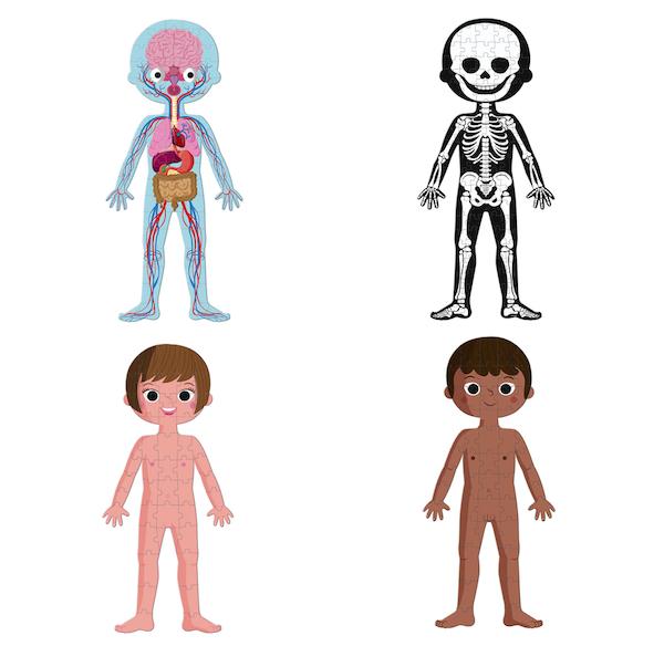 puzzle-educativo-cuerpo-humano